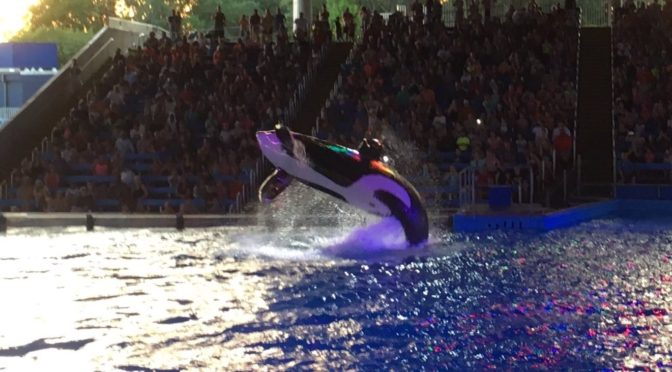 A Day at Seaworld San Antonio, Texas